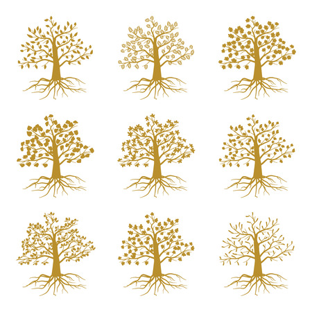 oak trees: Golden decorative trees like olive and oak, ash and maple isolated on white background. Silhouette of plant with leaf and roots. Vector illustration