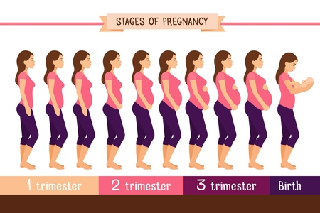 Pregnancy stages flat vector illustration. Pregnant woman and birth newborn trimester infographics. Pregnant and newborn, woman belly figure during pregnancy