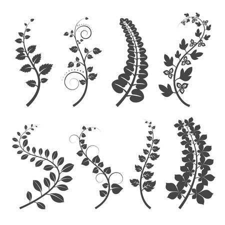 Curly branches with leaves silhouettes on white background. Plant branch with leaves. Vector illustration