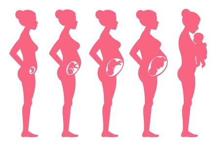 Foetus zwangerschap fasen. Vrouw zwanger staging en bevalling vector illustratie voor infographics