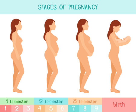 body torso: Pregnant beautiful woman vector infographics. Pregnancy by trimester stages illustration