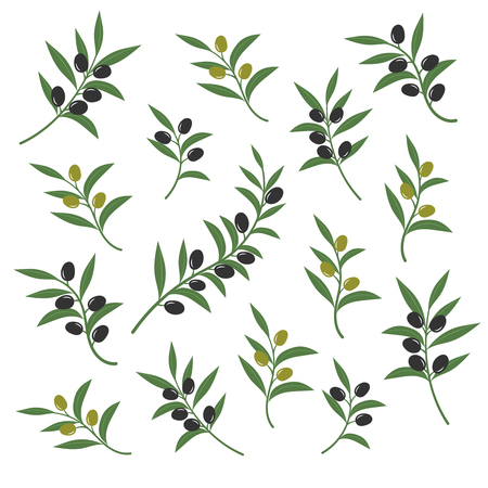 branch isolated: Olive branch set vector illustration. Italian sicilian or greek oil green branches symbols isolated on white background