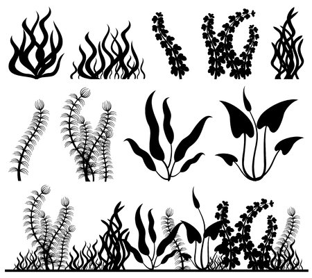 Sea plants and aquarium seaweed vector set