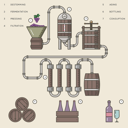Vino que hace el proceso o vinificación infographic ilustración del vector.