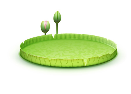 water lilly: Water Lily pad
