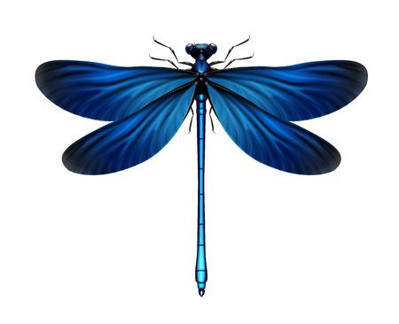 Calopteryx Vergine libellula