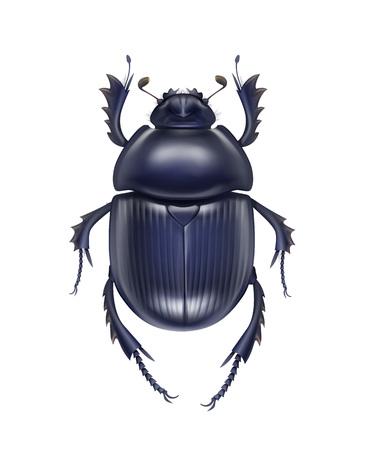 Scarabaeus sacer beetle Illustration