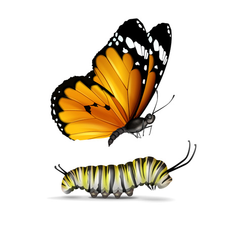 Vector realistic Plain Tiger or African Monarch butterfly and caterpillar close up side view isolated on white background Vettoriali