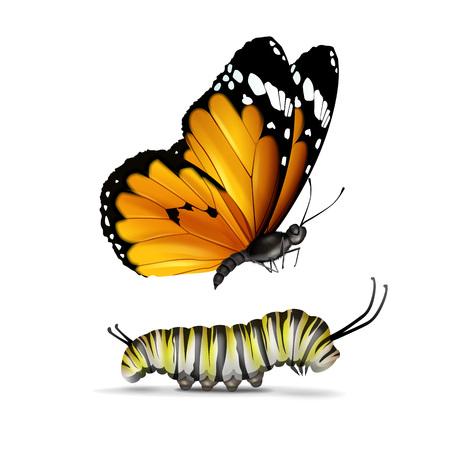 Vector realistische Plain Tiger of African Monarch vlinder en rups close-up zijaanzicht geïsoleerd op een witte achtergrond Vector Illustratie