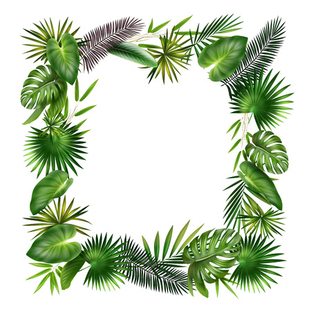 petiole: Vector frame from green, violet tropical plants palm, fern, bamboo and Monstera leaves isolated on white background