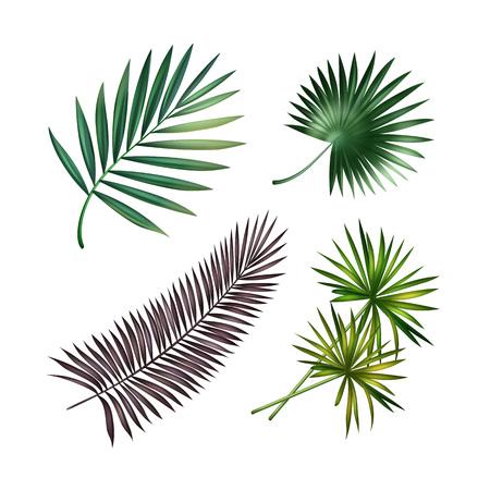 crecimiento planta: Conjunto de hojas de Palma