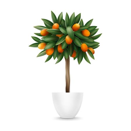 Kumquat tree in pot Illustration