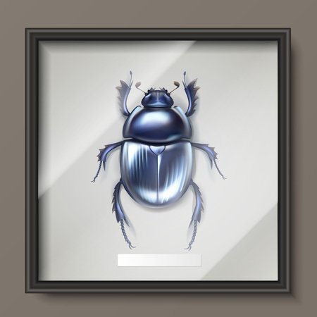 Dung beetle in frame