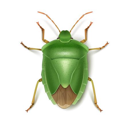 stink: Green stink bug