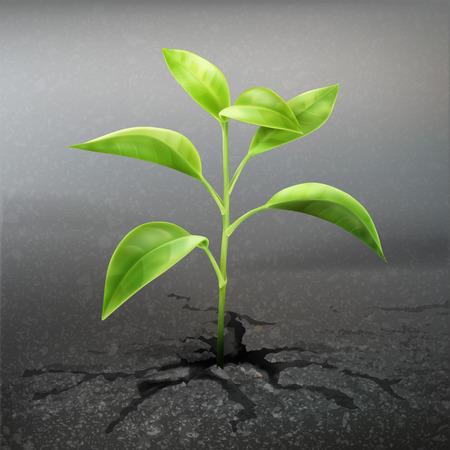 Plant sprout through asphalt Illustration