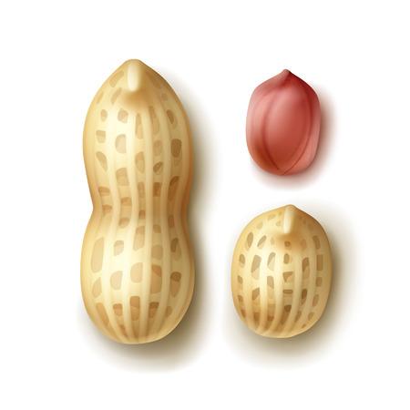땅콩 세트 스톡 콘텐츠 - 81005825