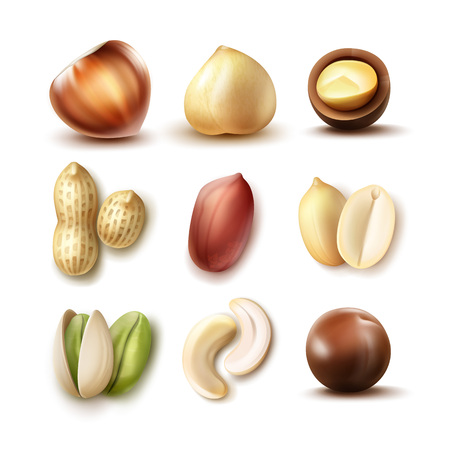 Vector set of different nuts: whole and half hazelnut, macadamia, pistachio, peanuts, cashew top, side view isolated on white background Stock Photo