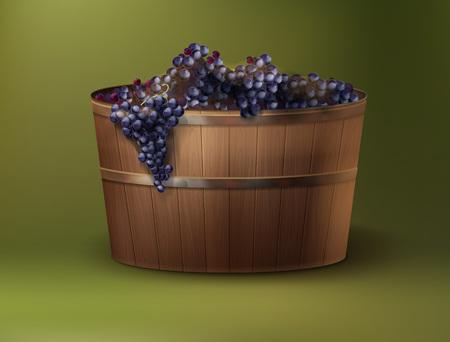 Ilustracja wektorowa świeżo zebranych winogron w drewnianej kadzi na zielonym tle