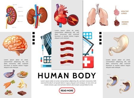 Cartoon human body infographic template with kidneys lungs brain stomach heart internal organs food and medical tools vector illustration