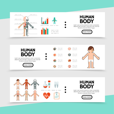 Flat anatomy horizontal banners with internal organs tubes clipboard tooth human muscular circulatory resperatory skeleton nervous systems vector illustration Illustration