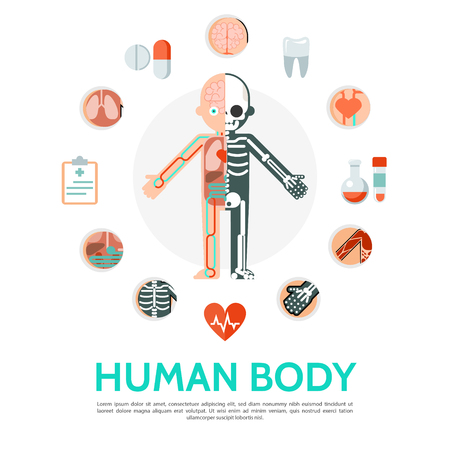 Flat human body anatomy round concept with sleketon circulatory system internal organs clipboard pills tubes tooth isolated vector illustration Illustration
