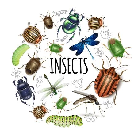 Insectos realistas concepto redondo con orugas libélulas mosquito escarabajo colorado patata y estiércol aislado ilustración vectorial