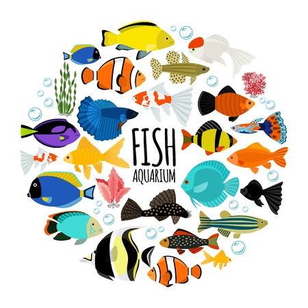Flat aquarium fishes round concept with colorful saltwater and freshwater fishes water bubbles corals isolated vector illustration Stock Illustratie