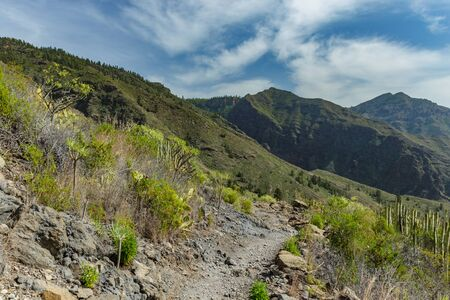 Stony path at upland surrounded by endemic plants. Sunny day. Clear blue sky and some clouds above the mountains. Rocky tracking road in dry mountain area. Tenerife.