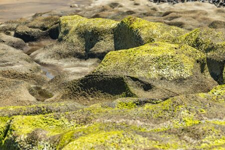 Selective center focus close up. Beach sand stone covered with algae and surraunding by holies with sea water. Natural texture background. Summer travel freedom adventure concept.