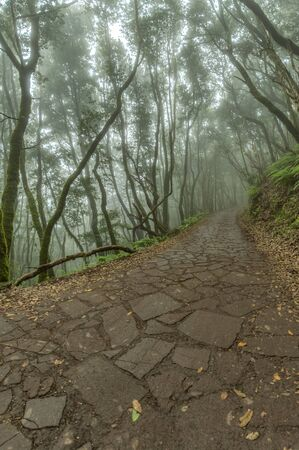 Relict forest on the slopes of the mountain range of the Garajonay National Park. Giant Laurels and Tree Heather along narrow winding paths. Paradise for hiking. Travel postcard. La Gomera, Spain. Stockfoto