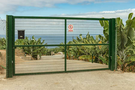 Concrete road - entry to a banana plantation. A green metal gate closes the driveway. Huge leaves of plants and green clusters of bananas are visible. North of Tenerife Island, Spain. Reklamní fotografie