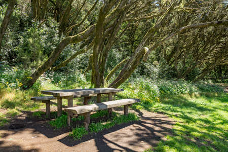 Benches and big wooden table for feast surrounded by young green grass in the barbecue area in the unique relict forest of National Park. Laguna Grande, La Gomera, Canary Islands. Reklamní fotografie