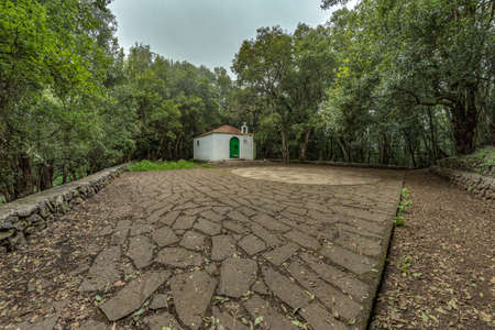 Super wide angle panorama. Relict forest on the slopes of the Garajonay National Park mountains. Giant Laurels and Tree Heather along narrow winding paths. Paradise for hiking. La Gomera, Spain.