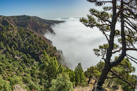 Mirador de Las Playas located in pine tree forest on El Hierro island. Spectaculate views from the point above the clouds. Canary islands, Spain