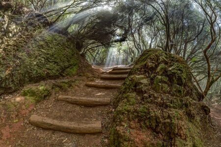 A young traveler in the relic forest. Anaga mountain range on the island of Tenerife. Giant laurels and heather tree along narrow winding paths. Paradise for hiking. Fish eye. Canary Islands, Spain Фото со стока