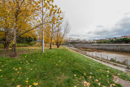 Colorful autumn trees with yellow leafs in the Madrid Rio, the park of the Manzanares River in Madrid, Spain.