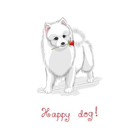 Vector illustration. White Spitz holds a rose.  Beautiful hand-lettering - Happy dog. Hand-drawing. Illustration