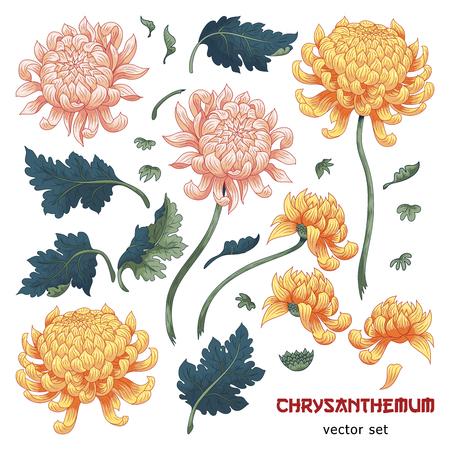 Set di elementi di fiori di crisantemo per creare disegni. Stile giapponese. Vettoriali