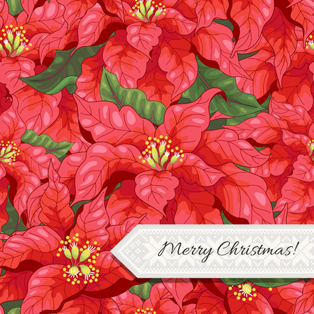 Vector seamless background with poinsettia flowers. Christmas collection. Inscription Merry Christmas.