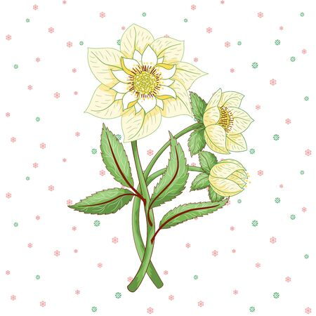 Vector element for design with hellebore flowers on winter ornament on seamless snow background
