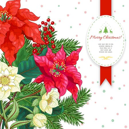 Vector card with Christmas star flowers, berries, hellebore and fir-tree. Place for your text Illusztráció