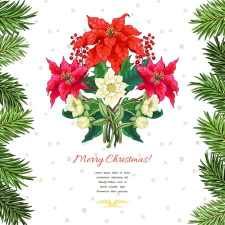 Christmas background with borders of fir tree and poinsettia flowers, holly berries, hellebore. Winter ornament on backdrop. Place for your text