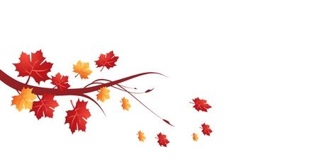 quercus: Autumn leaves