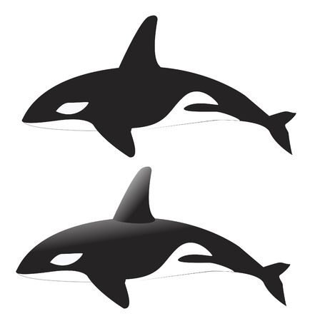 'killer whale': Whale