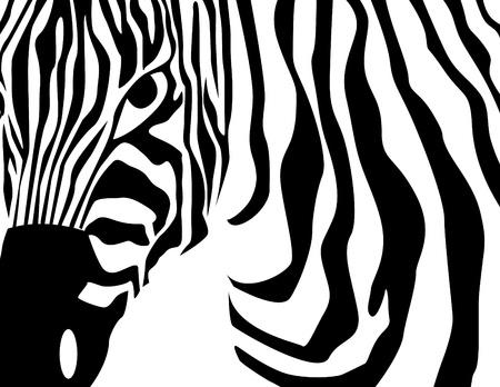 blanco negro: cebra