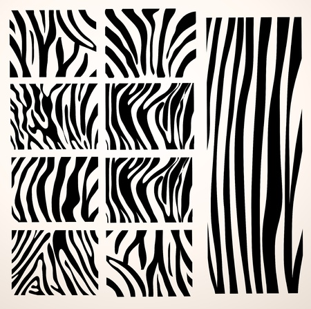 flauna: set of  zebra texture Black and White Illustration