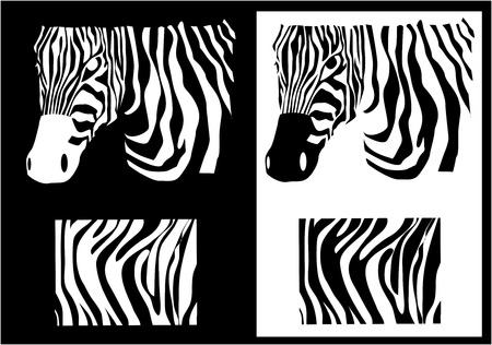 flauna: zebra texture Black and White