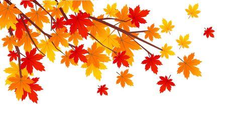 Herbstlaub Abbildung Standard-Bild - 86635030