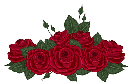 red roses vector illustration on white
