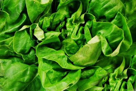 fresh green salad Stockfoto